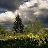 Ёлочка,цветочки, небо :: Владимир Гилясев