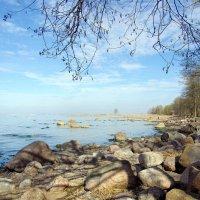 На берегу Финского залива. :: Лия ☼