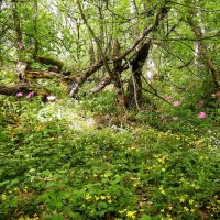 Лес на вершине горы Аю-Даг :: Руслан Newman