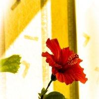 Цветок :: Victor SVT