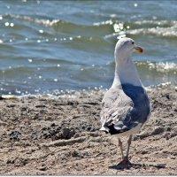 Чайка у моря :: Veselina *
