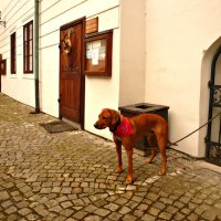 Преданный пёс :: Galina Belugina