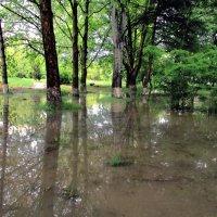 После дождя :: Сережка Фантом