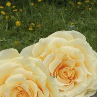 Цветы :: Анна Городничева