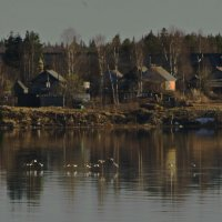 Гуси летящие над рекой Онега. :: Марина Никулина