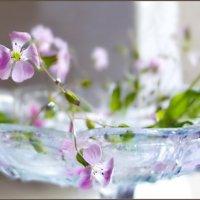 Маленькие радости одного майского утра.... :: Людмила Богданова (Скачко)