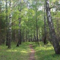 Таинственный лес :: Анастасия Рябкова