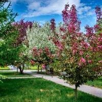 Весна, яблони в цвету :: Марк Э