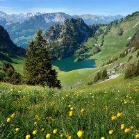 наш ковер - цветочная поляна... :: Elena Wymann