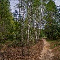 Дорога через лес :: Андрей Дворников