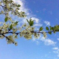 Какое  небо  голубое! :: Виталий Селиванов