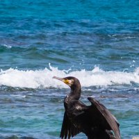 Морская птица в средиземном море. :: Лада