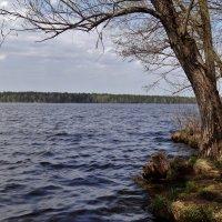 Волга-река :: Валентина. .
