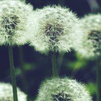 Воздушные шарики :: Swetlana V