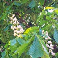 Весенний сад :: alemigun