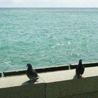 Голуби тоже хотят погреть спинки на крымском солнышке :: татьяна