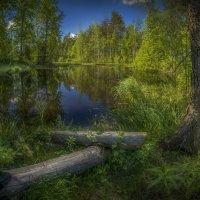 Торфяное озеро :: Алексей Строганов
