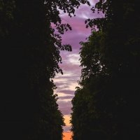 закат :: Woodoo mooroo