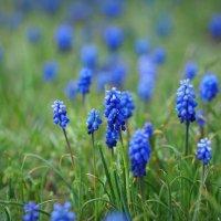 весенние цветы :: Ник Карелин