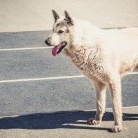 Собака :: Алексей Игнатьев