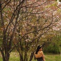 Весна :: Виктория Мамедова