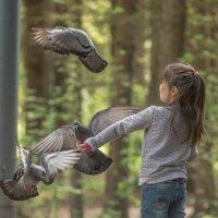 Летите голуби.летите! :: Виктор Евстратов