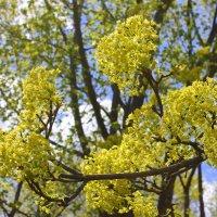 Чудный май – весны прелестник. :: Валентина ツ ღ✿ღ