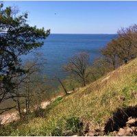 Калининградский залив. Весны начало. :: Валерия Комова