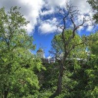 Высохшее дерево :: Сергей Цветков