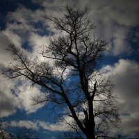 Небо и ветви :: Павел Зюзин