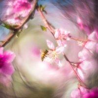 Майский цвет :: сергей