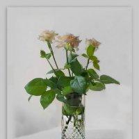 Три чайные розы в букете, :: Людмила Богданова (Скачко)