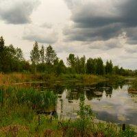 озеро в хмурую погоду :: Александр Прокудин