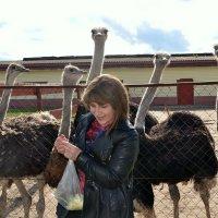 Поездка к страусам. :: Михаил Столяров