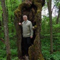 Чудеса природы, старое дерево! :: Андрей Буховецкий
