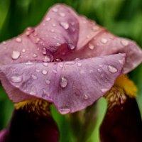 Снова дождь :: НИКОЛАЙ САРЖАНОВ