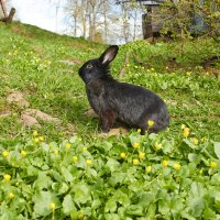 кроля :: Седа Ковтун