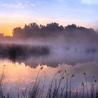 утро  на болоте :: Василий И Иваненко