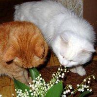 Кому цветы - кому салат :: Marina Bernackaya Бернацкая