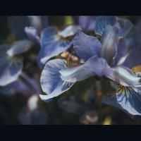 цветы :: Gmm12345