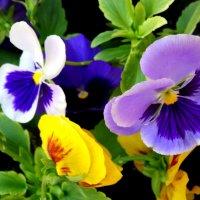 Майская палитра... :: Тамара (st.tamara)