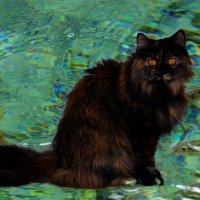 кошка и рыбки :: Александр Деревяшкин