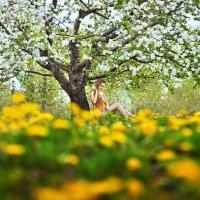 В яблоневых садах. :: Станислав Башарин