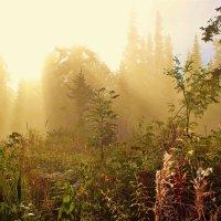 В пронизанном солнцем тумане :: Сергей Чиняев