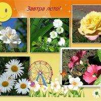 Завтра лето! :: Татьяна Смоляниченко