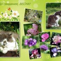 Не хочется расставаться с весной! :: Татьяна Смоляниченко
