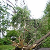 И еще раз про ураган..... :: Ирина Князева