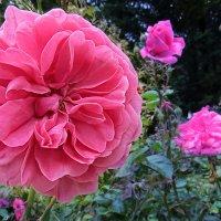 Цветок, уцелевший от ночного дождя :: Валерий Дворников