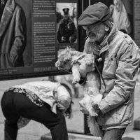 С собачкой на руках :: Александр Степовой