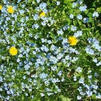 Сочетание желтого с голубым :: Лидия (naum.lidiya)